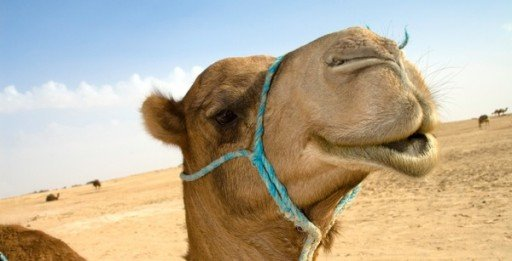 Nugget 213: The Camel Test